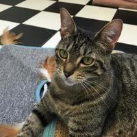 Adopt A Pet :: Tabitha - Richmond, VA