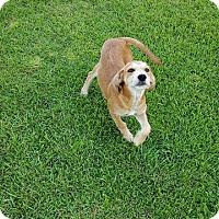 Adopt A Pet :: MATTIE - East Windsor, CT