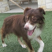 Adopt A Pet :: Murphy - North Richland Hills, TX