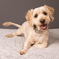 Adopt A Pet :: Lana - Salem, OR