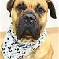 Adopt A Pet :: CLIFFORD (ECAS Kennel A1) - Pleasanton, CA