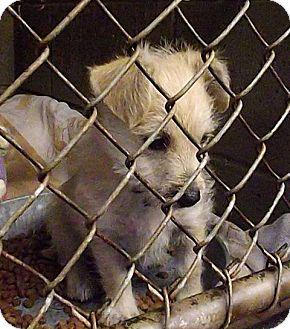 Terrier (Unknown Type, Medium) Mix Dog for adoption in Henderson, North Carolina - Daisy