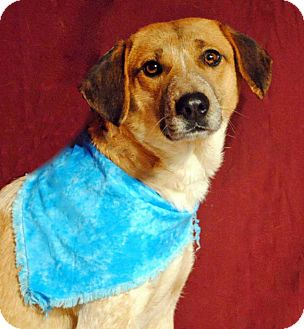 Beagle Mix Dog for adoption in Weatherford, Texas - Kyla