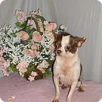 Adopt A Pet :: Contessa - Chandlersville, OH