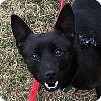 Adopt A Pet :: Merlin - Hastings, NY