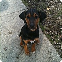 Adopt A Pet :: Tillie - Linton, IN