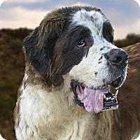 Adopt A Pet :: MARTY - Glendale, AZ