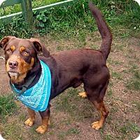Adopt A Pet :: Coco - Crescent City, CA