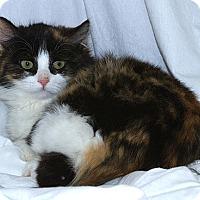 Adopt A Pet :: Chloe M - Sacramento, CA