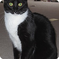 Adopt A Pet :: Guinness - St. Louis, MO
