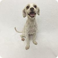 Adopt A Pet :: Jane - Mission Viejo, CA