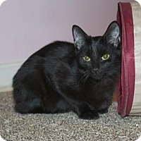 Adopt A Pet :: .Maitake - Ellicott City, MD