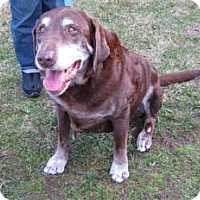 Adopt A Pet :: Rocky - San Francisco, CA