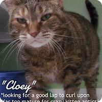 Adopt A Pet :: cloey - Muskegon, MI