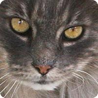 Adopt A Pet :: Albion - Republic, WA