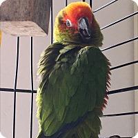 Adopt A Pet :: Puretti - Punta Gorda, FL