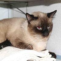 Adopt A Pet :: *ILLINOIS* - Salt Lake City, UT