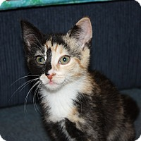 Adopt A Pet :: Filly (LE) - Little Falls, NJ