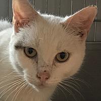 Adopt A Pet :: Ivy - Lafayette, NJ