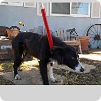 Adopt A Pet :: NELLY - Santa Maria, CA