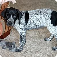 Adopt A Pet :: Dory - York, PA