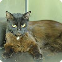 Adopt A Pet :: 10311870 - Brooksville, FL
