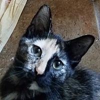 Adopt A Pet :: Talia - Colfax, IA