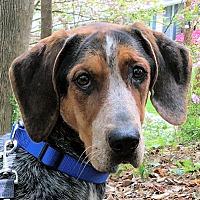 Adopt A Pet :: Waldo - Atlanta, GA