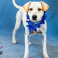 Adopt A Pet :: Cori - Austin, TX