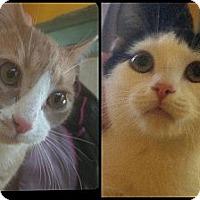 Adopt A Pet :: Ginger & Panda - Kensington, MD