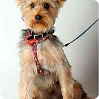 Adopt A Pet :: Billy the Kid - West Palm Beach, FL