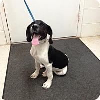 Adopt A Pet :: Cindy - Lancaster, VA