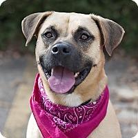 Adopt A Pet :: Summer - Kingwood, TX