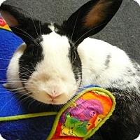 Adopt A Pet :: Panda - Newport, DE