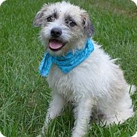 Adopt A Pet :: Tyra - Mocksville, NC