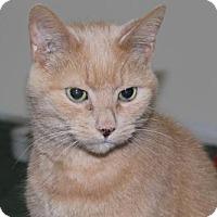 Adopt A Pet :: Duffy - Hamilton, ON