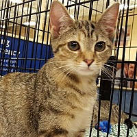 Adopt A Pet :: Lizzie - Knoxville, TN