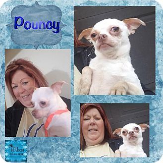 Chihuahua Mix Dog for adoption in Washington, Pennsylvania - Pouncy