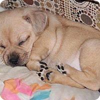 Adopt A Pet :: Ann-APPLICATION RECEIVED! - Millersville, MD