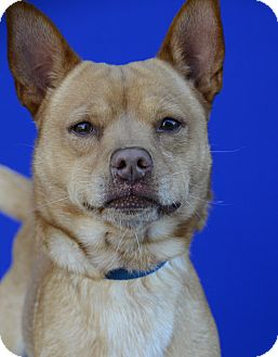 Terrier (Unknown Type, Small) Mix Dog for adoption in LAFAYETTE, Louisiana - BRENT