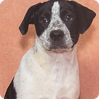 Adopt A Pet :: Dozer - Elmwood Park, NJ