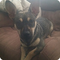 Adopt A Pet :: B.B. - Odessa, TX