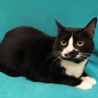 Adopt A Pet :: Booboo - Port Charlotte, FL