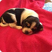 Adopt A Pet :: Oliver - Orleans, VT