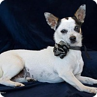 Adopt A Pet :: Hannah - Phelan, CA