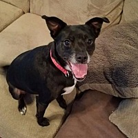 Adopt A Pet :: Bodie - Northport, AL