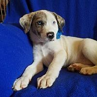Adopt A Pet :: Talu  (has been adopted) - Trenton, NJ
