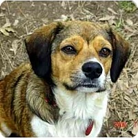Terrier (Unknown Type, Medium)/Beagle Mix Dog for adoption in Winnsboro, South Carolina - Precious