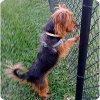 Adopt A Pet :: Fargo - Homestead, FL