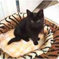 Adopt A Pet :: Miss Biscuits - Marietta, GA